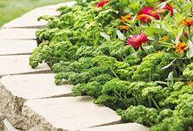 Garden Ideas / by Brigette Watkins