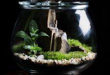 Miniature Gardens  + Terrariums / by Boise Flower & Garden Show