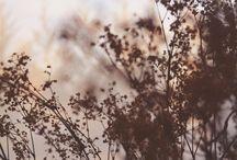 les fleurs / by Lauren Allison