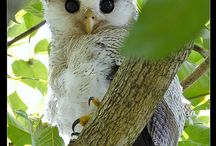 I Love Owls !! / I Love Owls ! / by Debbie Browne