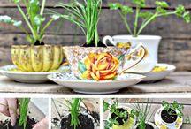 ~Tea Cup Fun~ / by Karen Russell