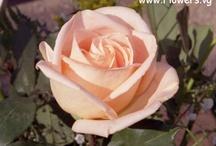 Beautiful Flowers / by ~*_Carol_*~