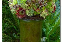 Garden succulent  / by Maria Bertrand
