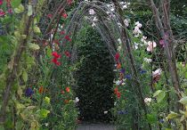 Veggie Garden Ideas / by Kelly Brenner