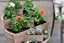 Recycled Garden / by Shayna Nelson