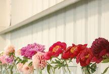 Flower garden / by Maria Fallon
