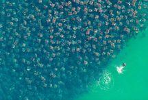 The World Is Amazing! / by Adam Lehman