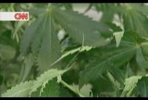 Medical Marijuana / by Viral Pig