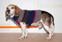 dogs in sweaters / by Humboldt Pet Supply