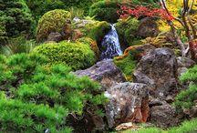 Garden / by Nicole Gaillard