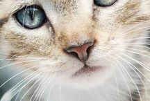 Kitties / by Sandra Kipps