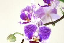 Orchid obsession / by KK