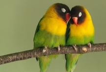 Birds / Birds / by Cher Sillinger
