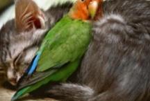 boo boo kitties / by Misti Miller