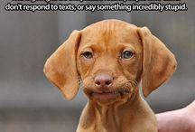 Pups / by Jennifer Romeyn