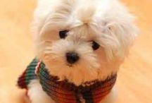 Cute little dogs / by Adrena Rogers