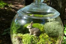 Terrariums / by Amy Williams