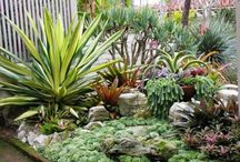 Suculentas / by TuJardínOnLine - Diseño de jardines de bajo mantenimiento