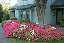 Yard/garden / by Penny Graf