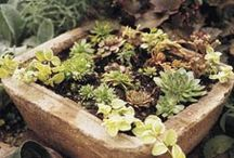 FAVORITE Gardening  / by Diane Jones