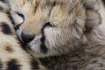 Animal Baby / Animal Baby / by นาย เจี๋ย