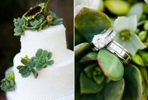 Succulents... / by Bergerons Flowers