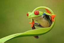 Feeling Froggy? Jump! / by Amy Anthony