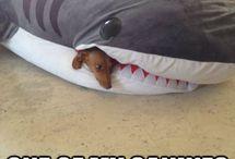 Funny Animals! / by Crystal Alvarez