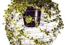 Botanical / by Brandy Steffen