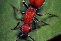 Ants / by Termita Rodriguez