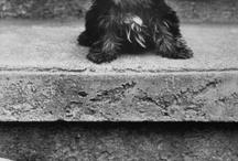 Puppies / by Molly Elefante