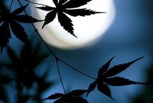 Photography & Marijuana / Great shorts and great marijuana! / by Dank Tank