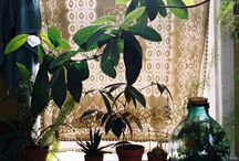 PLANTS & POTS PERFECTED  / by Beki Bennett