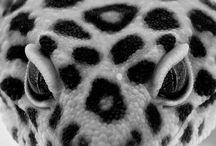 Terraristik / Exotic animals  / by Dragonh3art