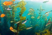 Under the Sea / by Nancy Nale