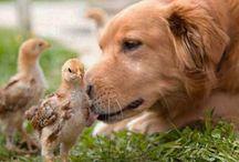 I LOVE dogs! / by Karen Valentine