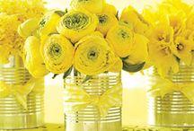 Festa della Donna / Ricette, articoli e curiosità sulla festa della donna. Buon 8 marzo a tutte! / by Amando.it -