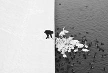 Black white / by Anneke van Bostelen