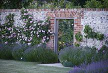 secret garden / by Carla Worline