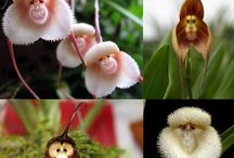Monkey Orchids & Flowers / by Sylvia Strickland