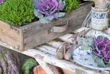 Garden / by Brooke Konecny Mandeville