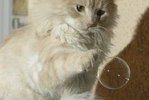 Long Haired Fluffy Kitties / by Barbara Manter