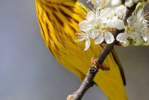 Birds / by Linda Price