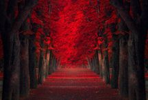 October days and Autumn nights / by Suzette Perez