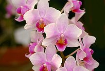 Orchid / by Irene Rojas