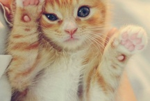 My feline friends○○ / by April Berry