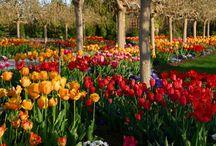 Blooms & Petals / by Karen Hall