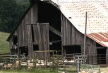 Barns-More 2 / by Paule Sullivan