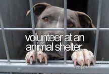 Volunteerism / by ESA International