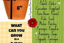 grow your food / by Vionette Rentas